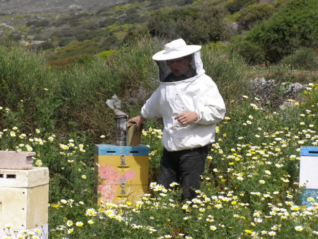 Organic Bee Keeping on Amorgos